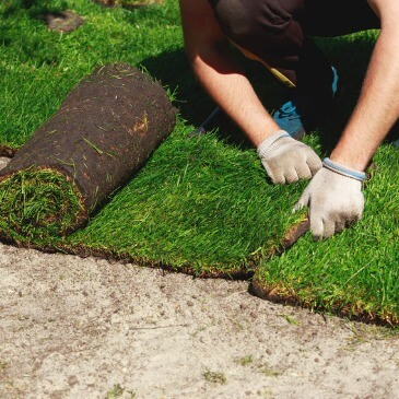 Sod Installation Services Rolla